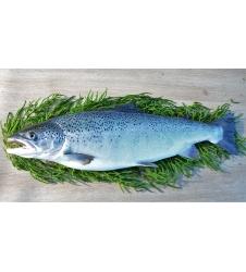 Filet de saumon d'Isigny frais